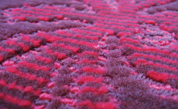 commercial_carpet_03d